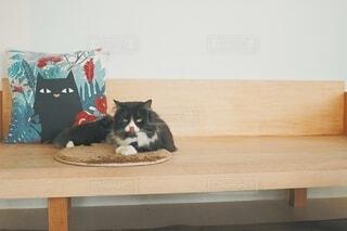 猫,インテリア,動物,屋内,ふわふわ,クッション,ソファー,座る,ベロ,舌,ネコ科,ネコ,もふもふ,猫舌,猫の舌