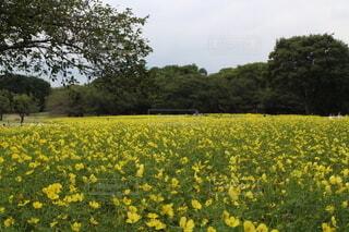 空,花,屋外,黄色,景色,草,樹木,草木