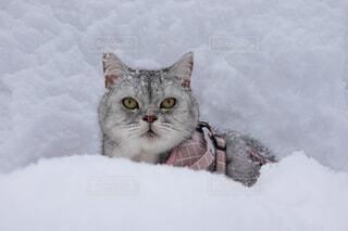 猫,動物,雪,景色