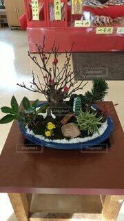 風景,冬,植木鉢