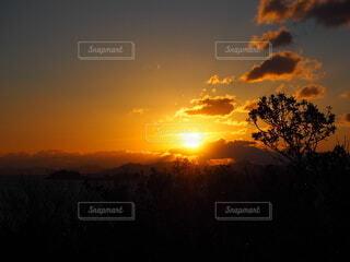 自然,風景,空,屋外,太陽,雲,樹木,日の出,初日の出,草木,羽豆岬展望台