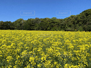 自然,風景,空,花,屋外,黄色,景色,草,樹木,草木