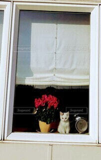 猫,動物,かわいい,窓,ねこ,観葉植物,寂しい