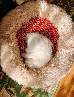 猫,動物,昼寝,子猫,丸,眠い,日向ぼっこ,お気に入り,ぽかぽか