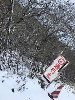 冬,雪,屋外,標識,樹木,運動,ウィンタースポーツ,テキスト