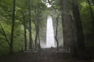 風景,森林,滝,樹木