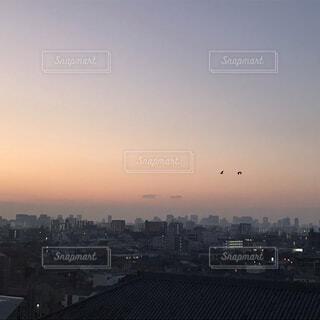 空,鳥,飛ぶ,都会,高層ビル,グラデーション,新年,初日の出,2羽,薄紫,霞