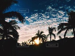 自然,風景,空,夏,夕日,屋外,太陽,雲,青空,沖縄,光,樹木,リラックス,旅,ヤシの木,バカンス,草木,パーム,ヤシ目