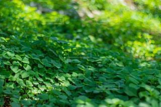 自然,木,屋外,太陽,緑,葉,木漏れ日,光,草木,ガーデン