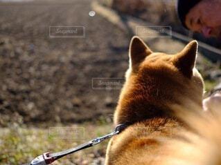 犬,動物,屋外,散歩,田舎,田んぼ