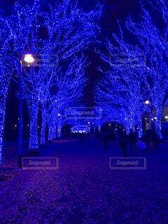 冬,夜,クリスマス,照明,景観,クリスマス ツリー