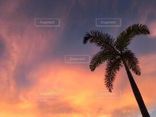 自然,風景,空,屋外,海外,雲,夕暮れ,シルエット,樹木,旅行,旅,トロピカル,ヤシの木,ヤシ,フィリピン,東南アジア,バカンス,リゾート,サンセット,海外旅行,セブ島,パーム,マクタン島,インスタ映え