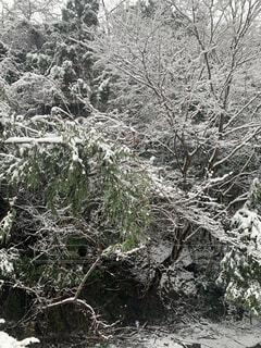 自然,風景,冬,森林,木,雪,屋外,景色,樹木,霜,冷たい,草木,地衣類