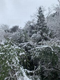 自然,風景,冬,森林,雪,屋外,景色,樹木,冷たい,草木