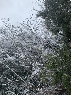自然,風景,森林,雪,屋外,樹木,草木