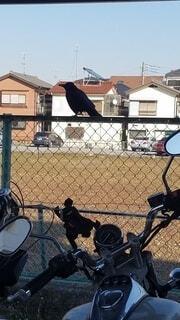 屋外,#birds,#crow