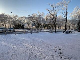 風景,冬,雪,屋外,冷たい