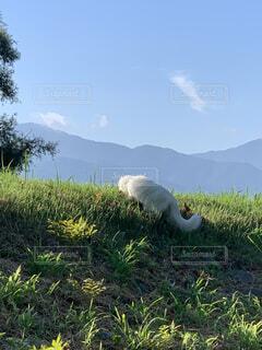 猫,自然,空,動物,鳥,屋外,景色,草