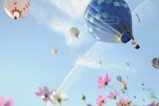 コスモスと気球の写真・画像素材[4165853]