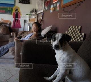 椅子に座ってこっちを見ている犬とそれを見つめる人の写真・画像素材[4243844]