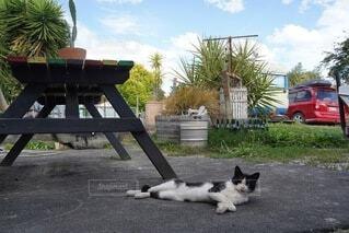 ベンチのそばで寝転んでこっちを見ている猫の写真・画像素材[4243840]