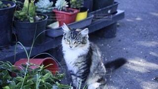 植物の前に座ってぼーっとしている猫の写真・画像素材[4243842]