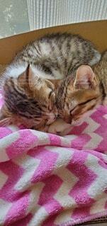 猫,かわいい,子猫