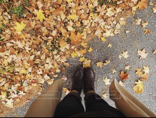 秋,紅葉,綺麗,落ち葉,ブーツ,履物,トレンチコート,肌寒い