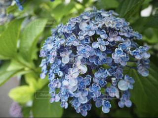 花,緑,青,葉,景色,朝顔,草木,フローラ