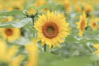 花のクローズアップの写真・画像素材[4078955]
