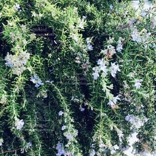 風景,花,屋外,ブルー,草木,小さい花,ガーデン,可憐な