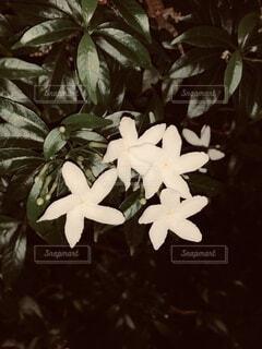 花,白,かわいい,白い花,思い出,小さい花