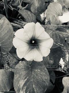 花,モノクロ