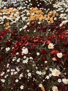 花,お花畑,景色,草木