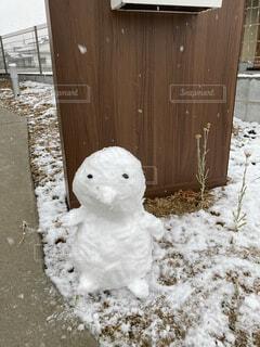 冬,屋外,雪だるま,ぺんぎん