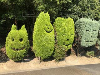 緑,葉,笑顔,顔,草木,ガーデン