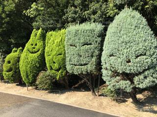 屋外,緑,樹木,草木,ガーデン