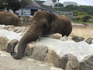 動物,屋外,岩,象,動物園
