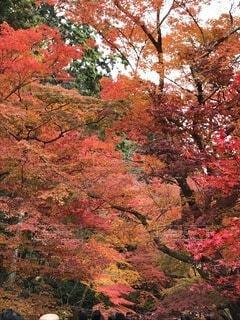 秋,紅葉,葉,景色,カエデ