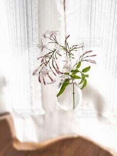 窓辺の一輪挿しに咲く愛らしいジャスミンの写真・画像素材[4356322]