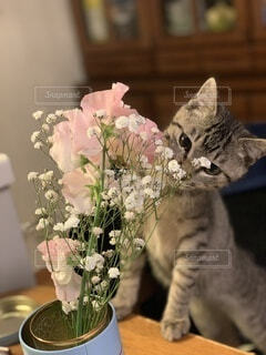 猫,花,動物,屋内,花束,テーブル,草木