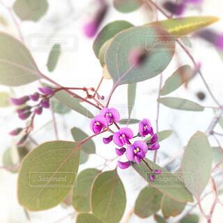 春の訪れの写真・画像素材[4194828]