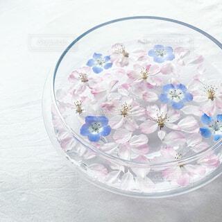 桜とネモフィラの写真・画像素材[4313050]