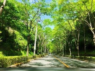 自然,空,夏,森林,屋外,緑,道路,景色,爽やか,樹木,草木