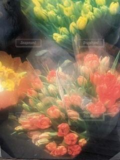 春の訪れの写真・画像素材[4230244]