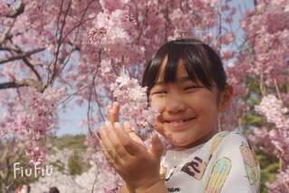 桜と女の子の写真・画像素材[4285001]