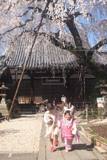 桜の木の下での写真・画像素材[4300892]