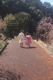 桜舞い散る道をの写真・画像素材[4300893]