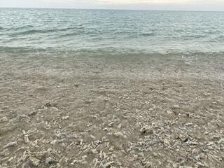 海,空,砂,ビーチ,水面