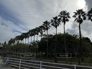 空,屋外,沖縄,樹木,ヤシの木